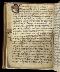 Judgements Concerning Privileged Classes, in an Irish Law Book f.143v